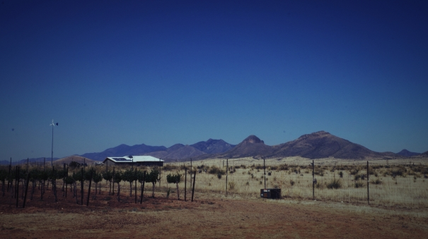 Arizona Vineyard